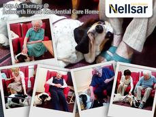 Dog Calming Products Pets For Homes Uk