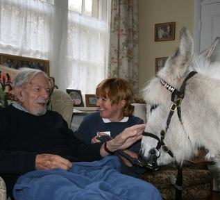 An Elisabeth Svendsen Trust donkey making a care home visit