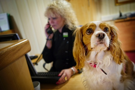Pets have an important role at Sanctuary care homes